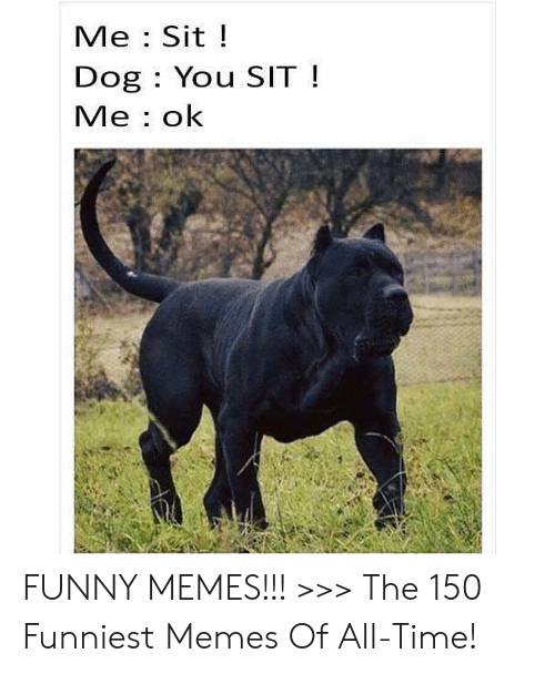 Dogs Know Your Meme