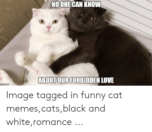Noone Can Know Aboutour Forbidden Love Image Tagged In Funny Cat