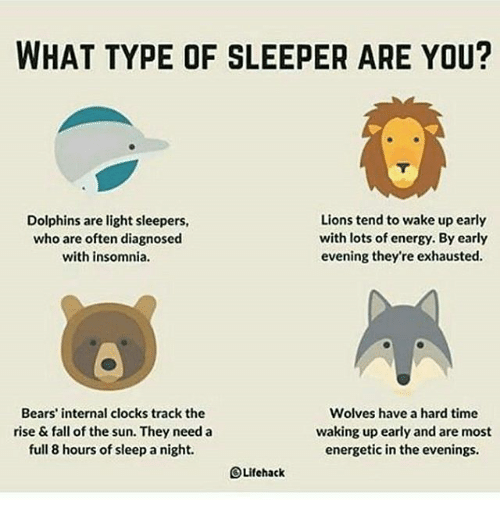 What Type Of Sleeper Are You Dolphins Are Light Sleepers Who Are
