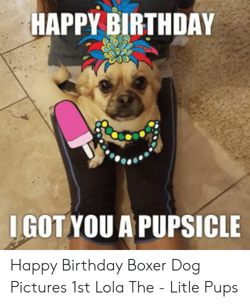 25 Best Memes About Happy Birthday Boxer Dog Happy Birthday Boxer Dog Memes
