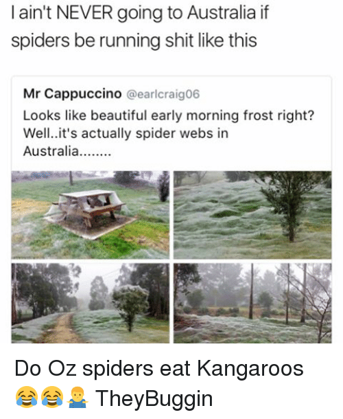L Ain T Never Going To Australia If Spiders Be Running Shit Like