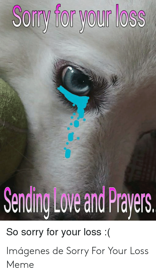 Im So Sorry For Your Loss Cat Lolcats Lol Cat Memes Funny