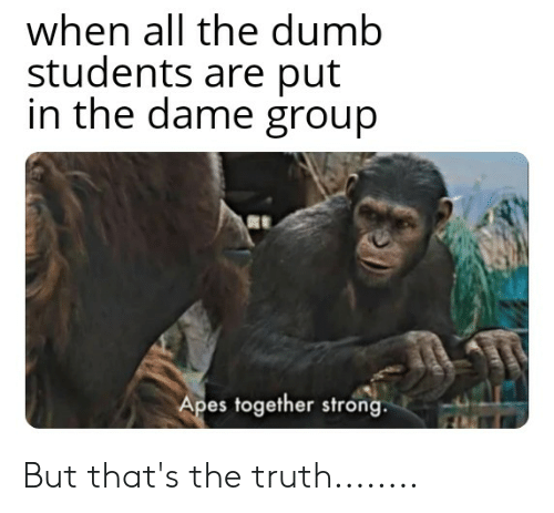 When All The Dumb Students Are Put In The Dame Group Apes Together