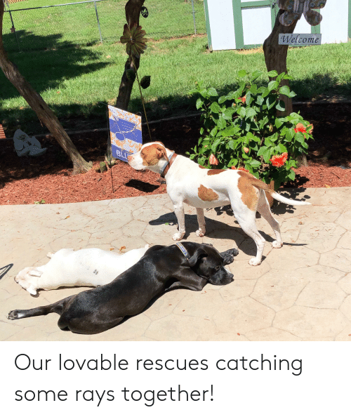 Welcome Blu Sino Usb Our Lovable Rescues Catching Some Rays