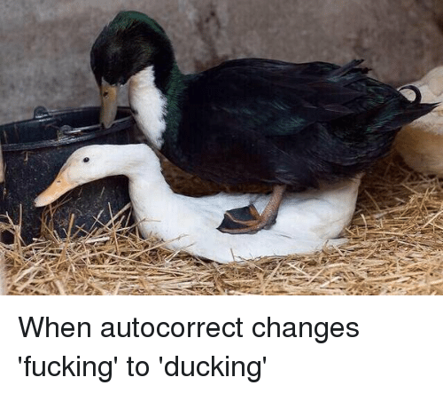 A When Autocorrect Changes Fucking To Ducking Autocorrect Meme