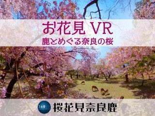 【VR】お花見VR 鹿とめぐる奈良の桜