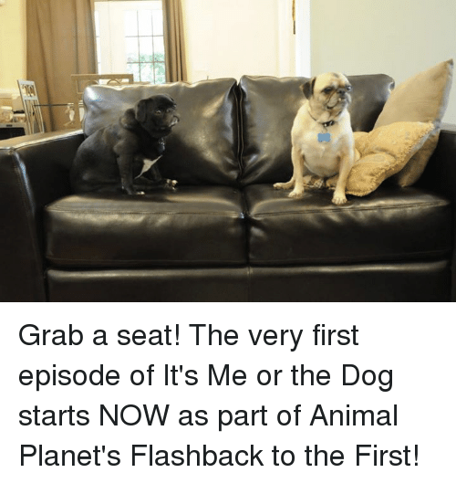Grab A Seat The Very First Episode Of It S Me Or The Dog Starts