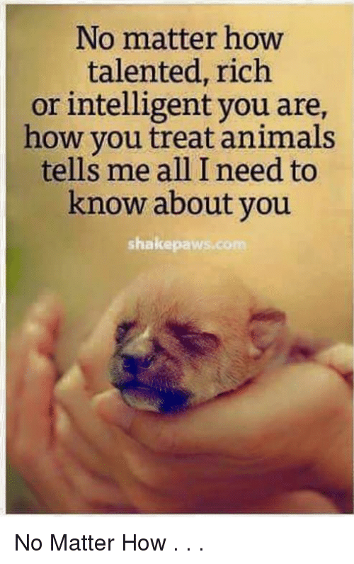 Stop The Hate All Dogs Matter Make A Meme