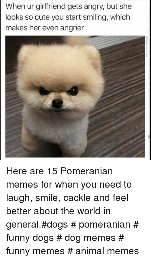 25 Cute Memes To Make You Feel Better