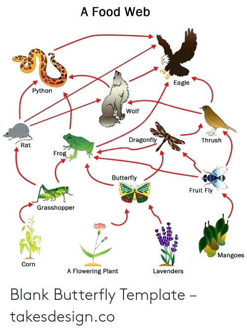 A Food Web Eagle Python Wolf Dragonfly Thrush Rat Frog Butterfly