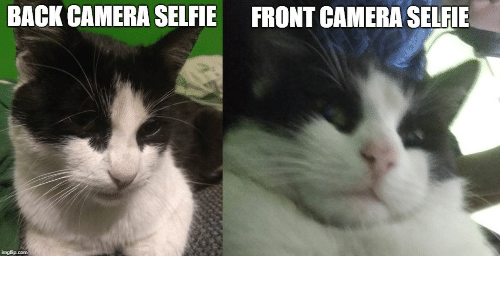 Staring Animals Know Your Meme
