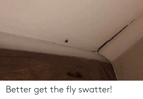 Better Get The Fly Swatter Funny And Sad Meme On Me Me