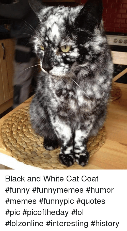 Black And White Cat Coat Funny Funnymemes Humor Memes