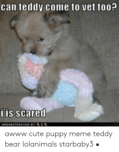 Can Teddy Come To Vet Too Is Scared Awww Cute Puppy Meme Teddy