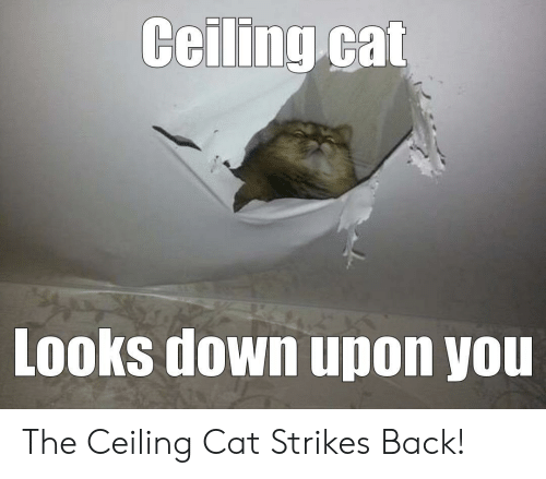 Best Woman Yelling At Cat Memes 28 Of The Funniest Examples Ever