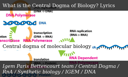 I Want Your Lance Of Longinus Into My Central Dogma To From