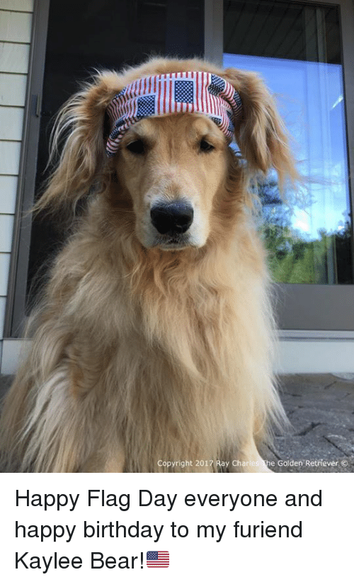 Copyright 2017 Ray Charles E Golden Retriever Happy Flag Day Everyone And Happy Birthday To My Furiend Kaylee Bear Birthday Meme On Me Me