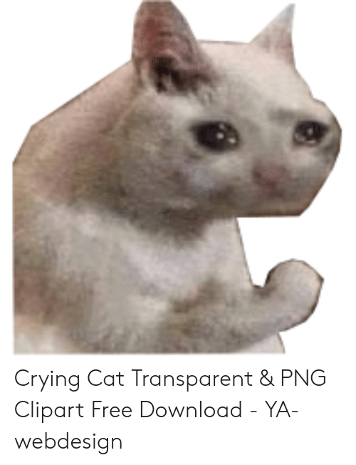 Crying Cat Transparent Png Clipart Free Download Ya Webdesign