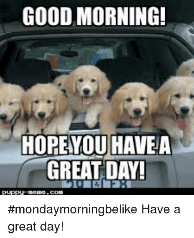 GOOD MORNING HOPEYOU HAVEA GREAT DA #Mondaymorningbelike Have a Great Day!  | Meme on ME.ME
