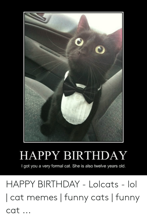 Happy Birthday I Got You A Very Formal Cat She Is Also Twelve Years Old Happy Birthday Lolcats Lol Cat Memes Funny Cats Funny Cat Birthday Meme On Me Me