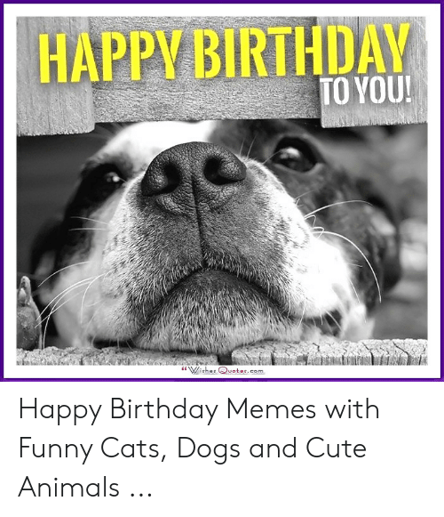 Happy Birthday To You Happy Birthday Memes With Funny Cats Dogs And Cute Animals Animals Meme On Me Me