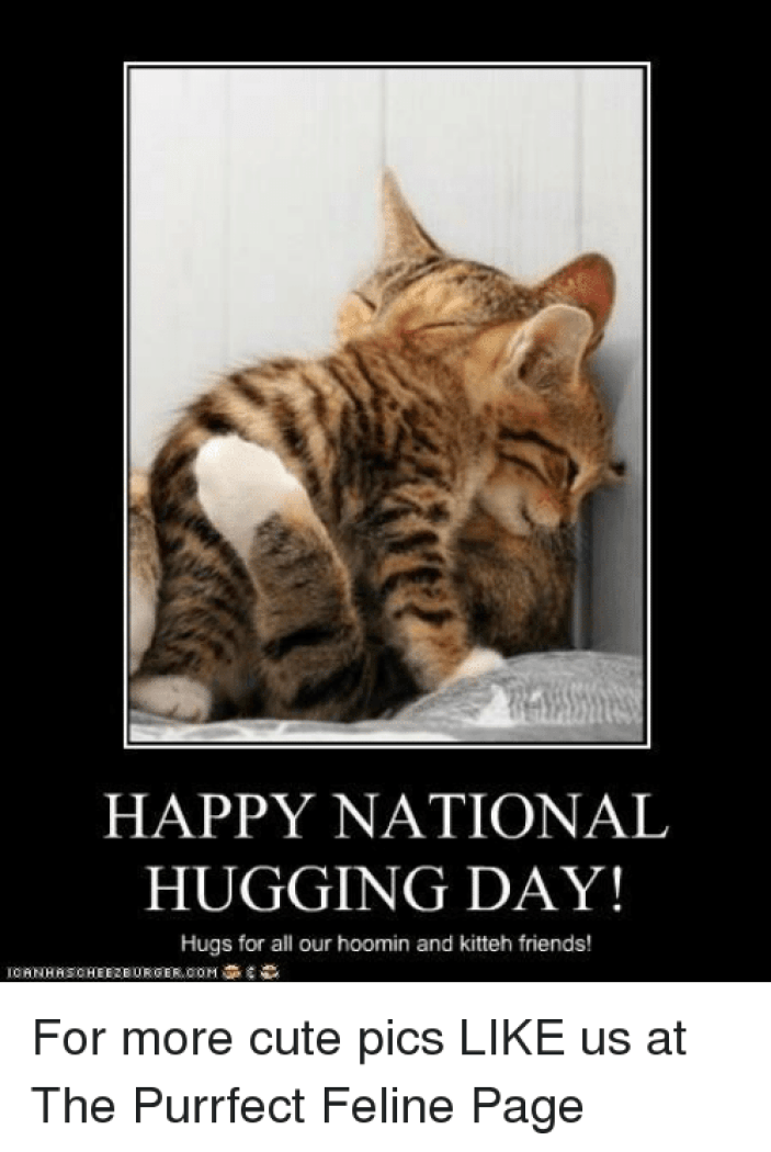 HAPPY NATIONAL HUGGING DAY! Hugs for All Our Hoo N and Kitteh Friends!  ICANHASCHEEZEURGERCOM for More Cute Pics LIKE Us at the Purrfect Feline  Page | Meme on ME.ME