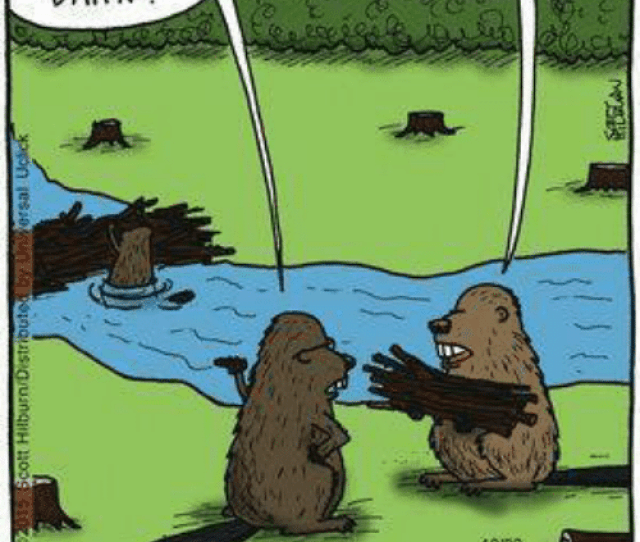 Hear Thatall This Political Darn He Correctness Has Called It A Gone Too Far Darn 1002 Dam Political Correctness Said The Big Hairy Beaver Meme On Me Me