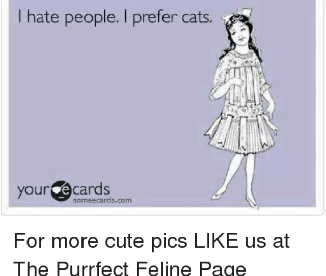 Cats Cute And Memes I Hate People I Prefer Cats Your