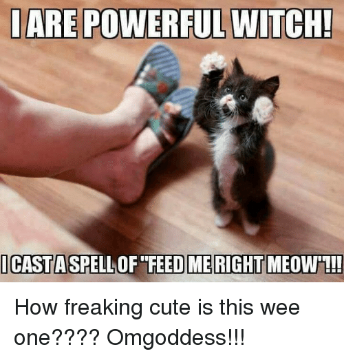 Iare Powerful Witch Icastaspelloffeed Right Meow Me How