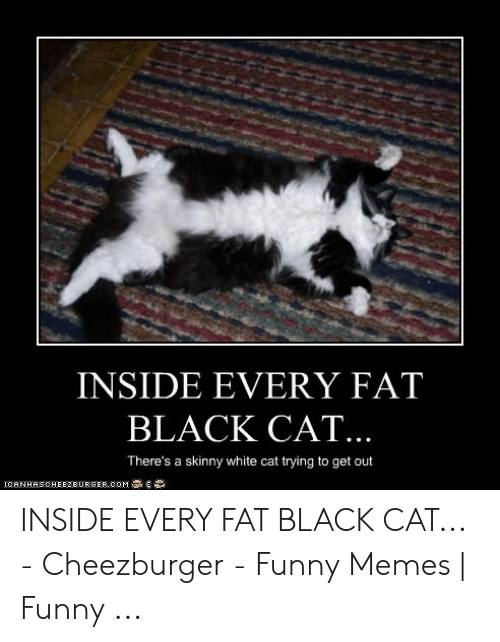 Inside Every Fat Black Cat There S A Skinny White Cat Trying To