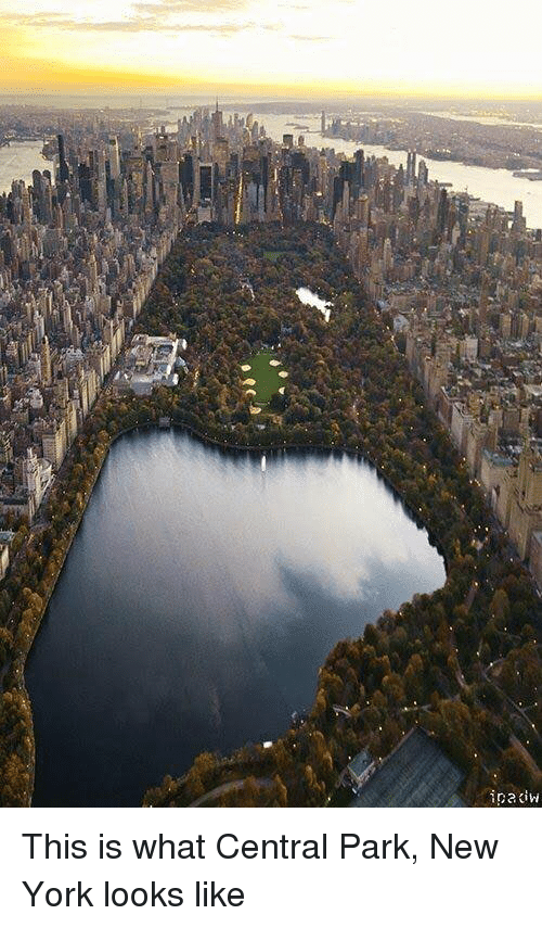 Central Park At Night By Shadowgun Meme Center
