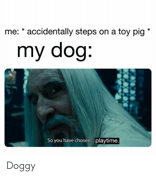 Me Accidentally Steps On A Toy Pig My Dog So You Have Chosen