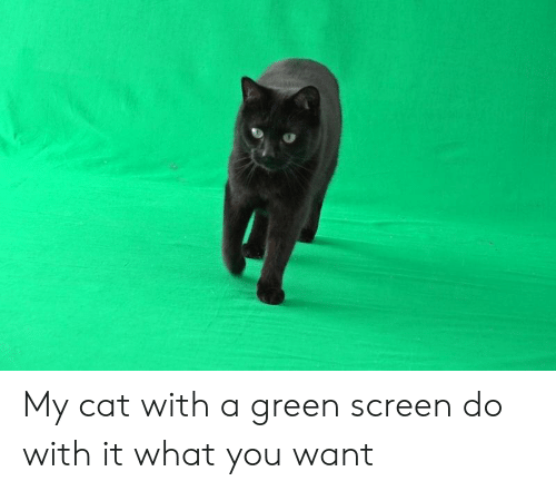 Green Screen Stock Video Footage 4k And Hd Video Clips