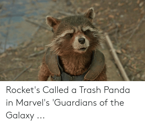 Rocket S Called A Trash Panda In Marvel S Guardians Of The Galaxy