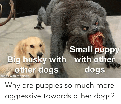 25 Best Pupper Doggo Memes What The Fuck Is A Memes The Memes