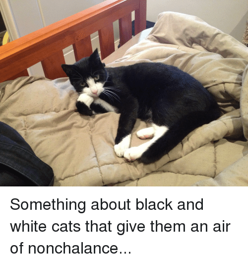Something About Black And White Cats That Give Them An Air Of