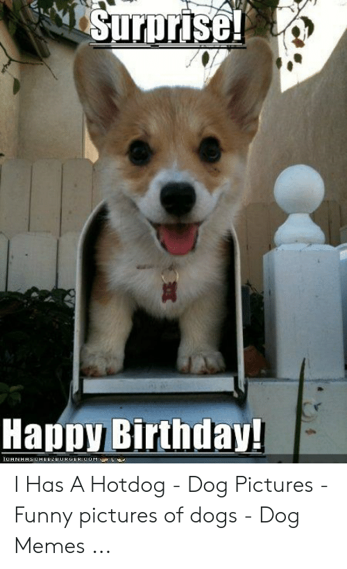 Surprise Happy Birthday 1chnhhsuheezburger Comae I Has A Hotdog Dog Pictures Funny Pictures Of Dogs Dog Memes Birthday Meme On Me Me