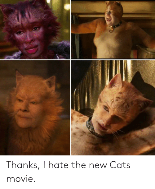 Hilarious Memes Pour In As Movie Critics Shred Cats In Reviews