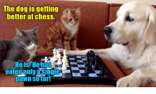 25 Best Memes About Dog Play Dog Play Memes