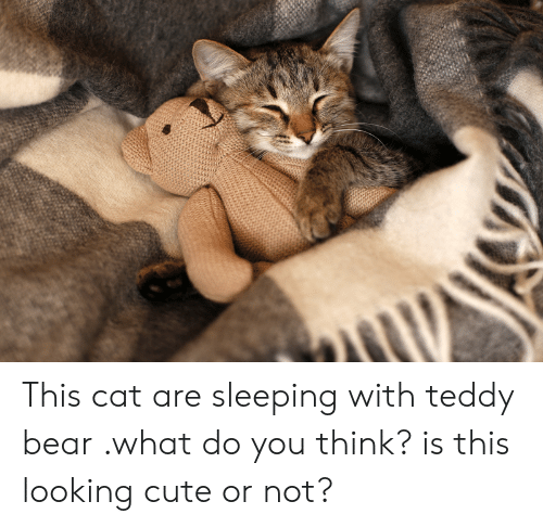 This Cat Are Sleeping With Teddy Bear What Do You Think Is This