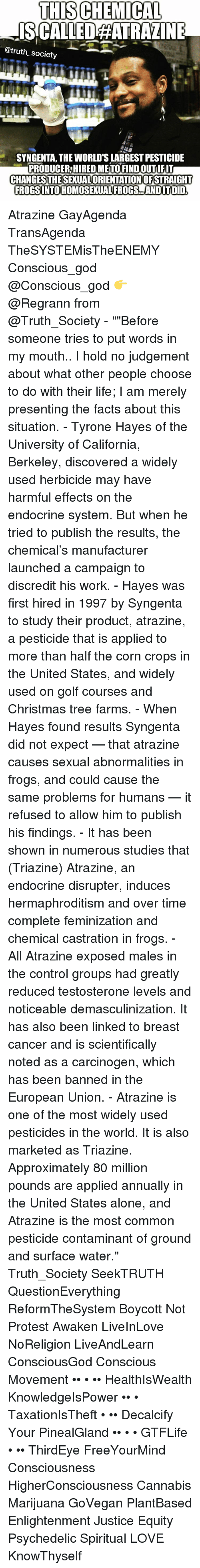 Atrazine Frogs Exposed