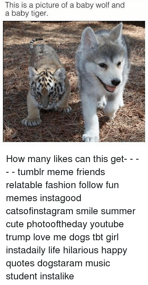 This Is A Picture Of A Baby Wolf And A Baby Tiger How Many Likes Can This Get Tumblr Meme Friends Relatable Fashion Follow Fun Memes Instagood Catsofinstagram