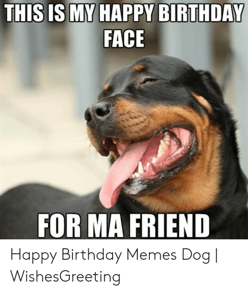 20 Funny Birthday Memes With Dogs Factory Memes