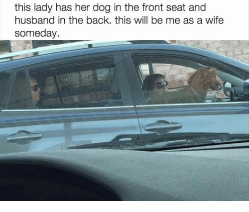 Funny Uber Animal Memes Love Your Pet Pets Animals