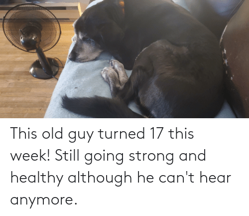 This Old Guy Turned 17 This Week Still Going Strong And Healthy