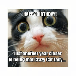 Happybirthday Ustanother Year Closer To Being That Crazy Cat Lady Take The Lovely Funny Cat Memes Birthday Scientist Cat Hilarious Birthday Meme On Me Me
