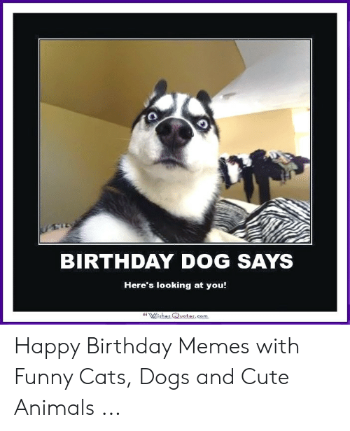 Tl Birthday Dog Says Here S Looking At You Wishes Qvotescom Happy Birthday Memes With Funny Cats Dogs And Cute Animals Animals Meme On Me Me