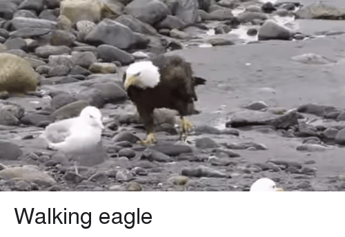 Walking Eagle Eagle Meme On Me Me