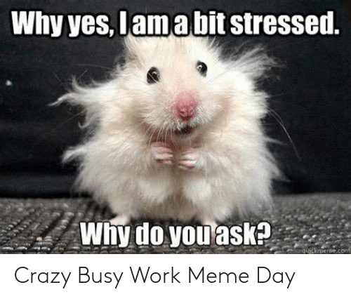 Why Yes Lamabit Stressed Why Do You Ask Qutkmernecon Crazy Busy
