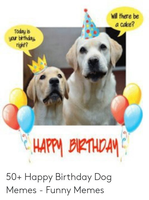 Wil There Be A Cake Today Is Your Brthda Right 50 Happy Birthday Dog Memes Funny Memes Birthday Meme On Me Me